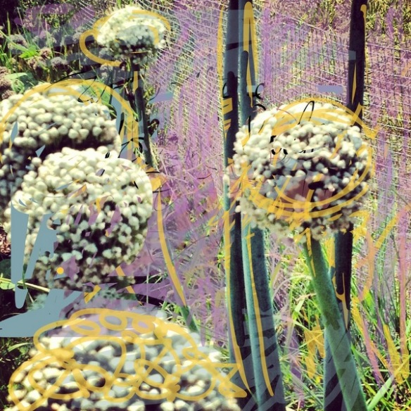 Allium artwork